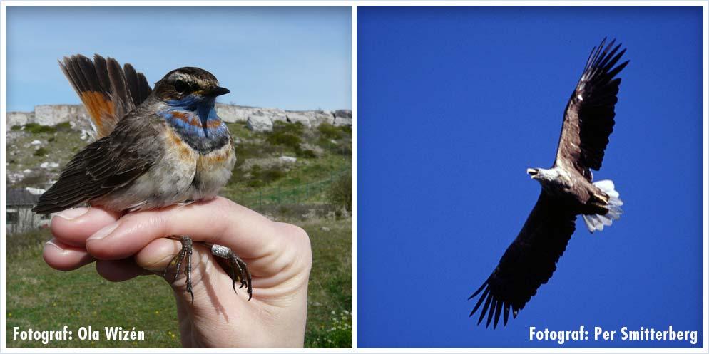 Birds Watching - Ornithologists